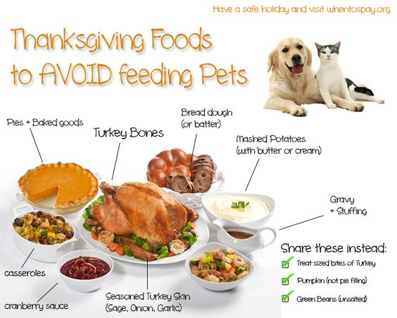 A Safe Thanksgiving Feast for your Pet