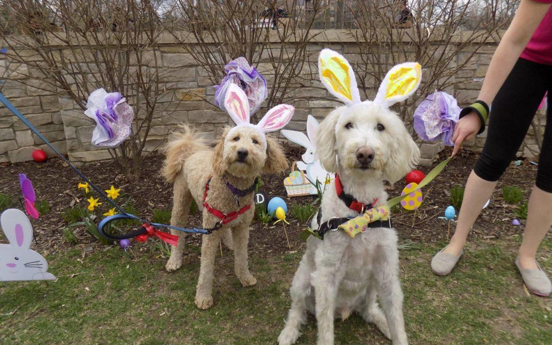 Easter Egg Hunt Photos