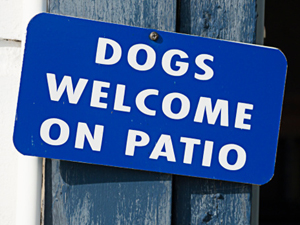 dog friendly restaurants downtown downers grove