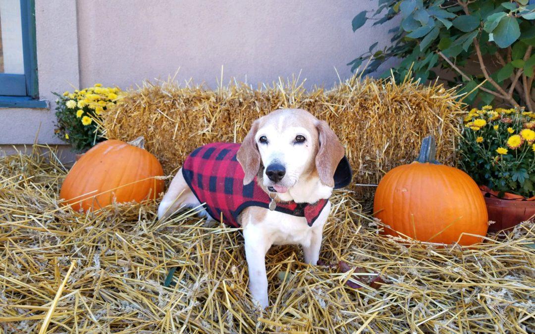 Pumpkin Isn't Just a Fall Food