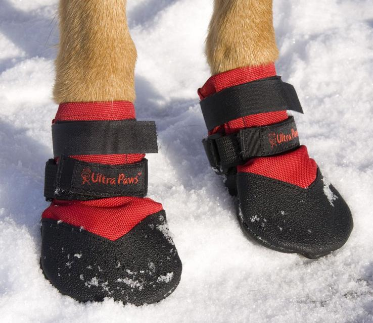 Can I Protect My Pup's Paw This Winter?
