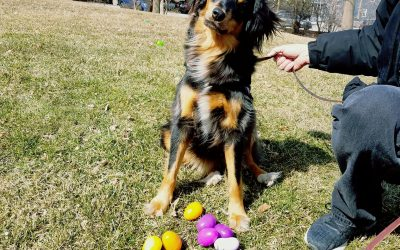 Annual Easter Egg Hunt 2020-Cancelled – Reschedule TBD