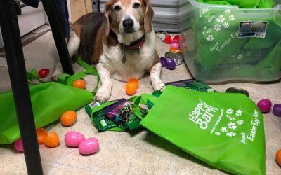 DIY Easter Egg Kit Ingredient List