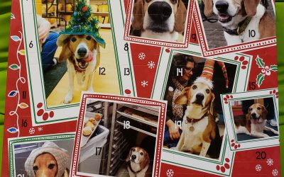 2020 Happy Dog Barkery Advent Calendar