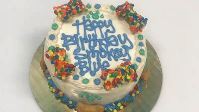 Happy Dog Barkery - Celebration Cake
